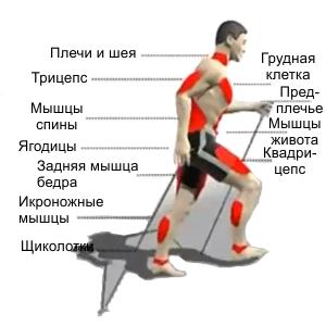 какие мышцы работают при скандинавской ходьбе