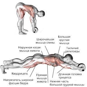 какие мышцы качает ролик