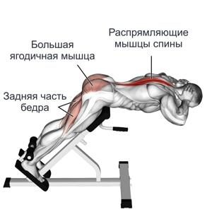 какие мышцы качаются экстензией