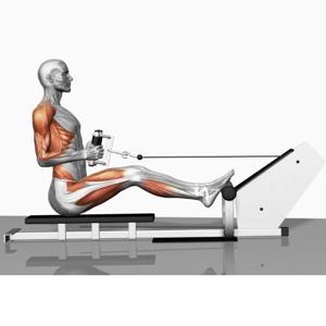 рабочие мышцы при тяге блока