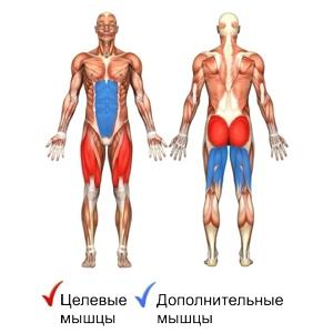 рабочие мышцы при приседаниях